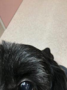 ほほえみ動物病院 一時預かり